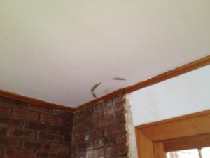 apartment ceiling mold