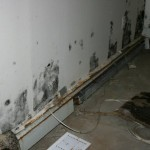 homeowners insurance and mold damage