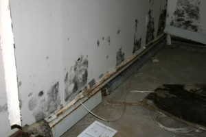 commercial mold and moisture